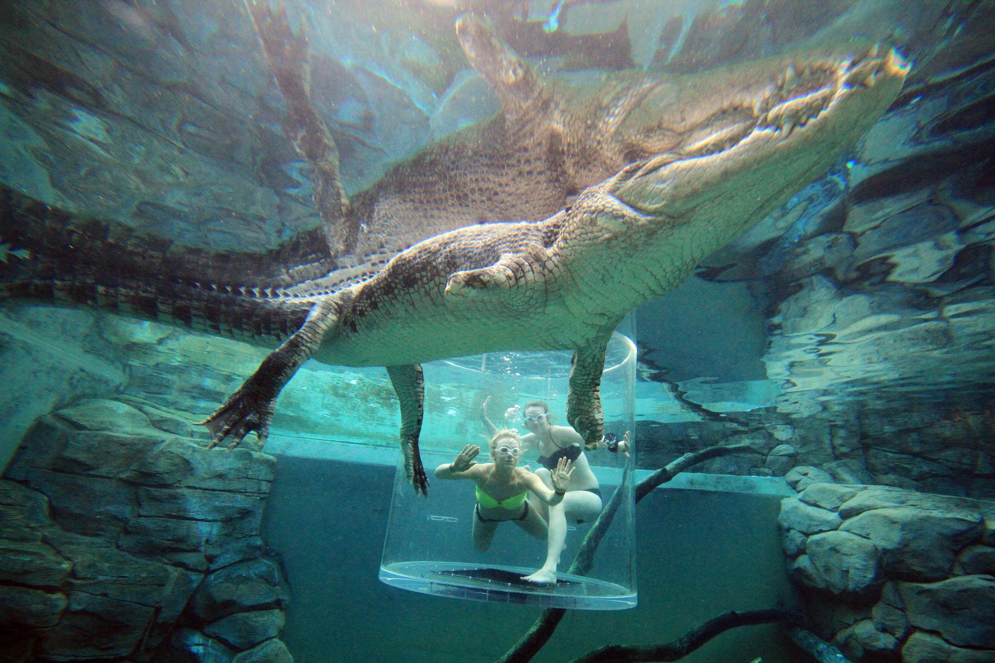 crocosauruscove