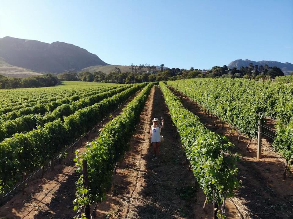 vinícolas Cape Town