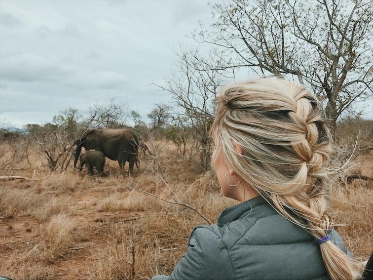 melhor época safari no kruger park