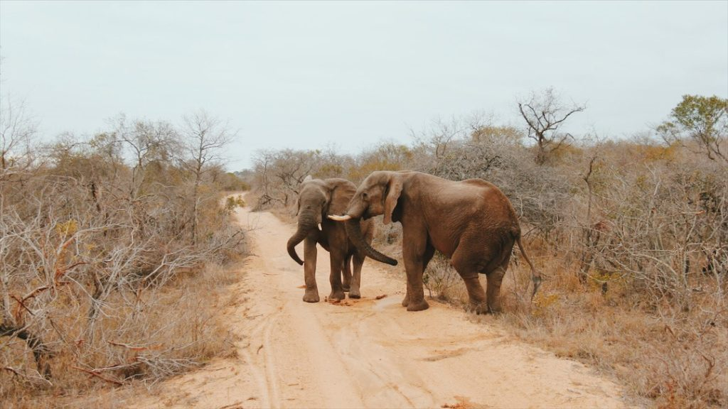 Lodge Africa do Sul