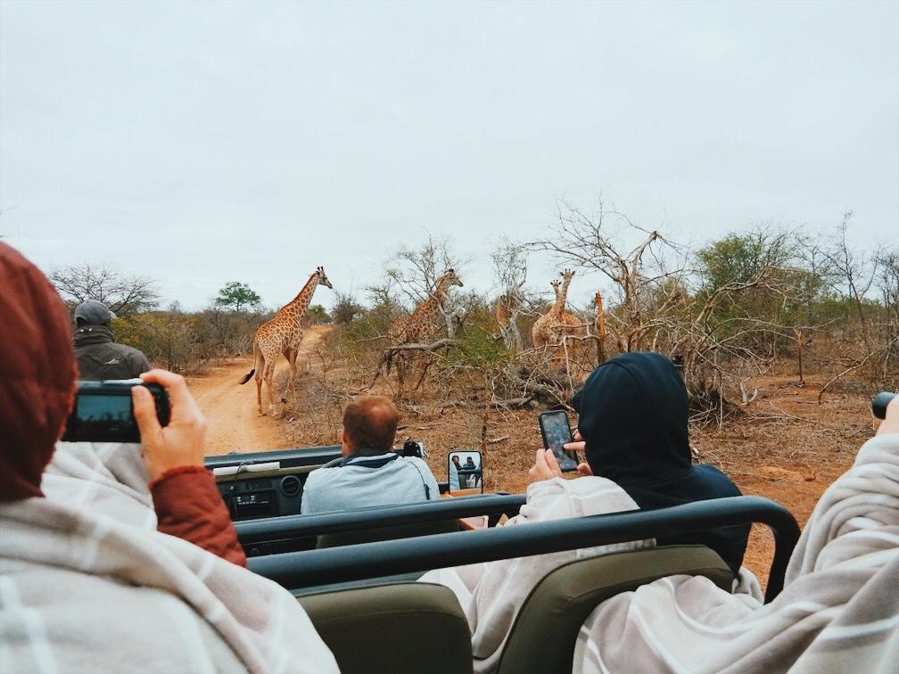 safari no kruger park