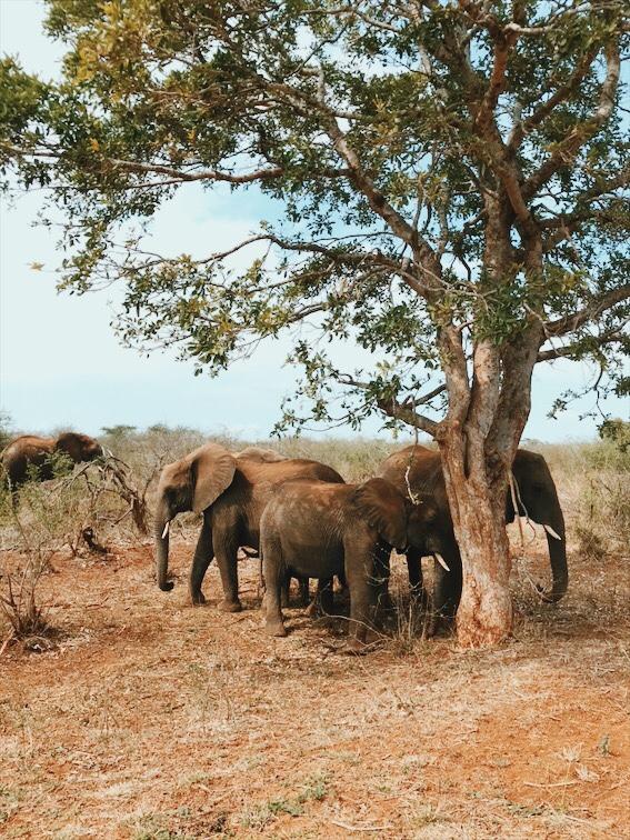 safari kruger park