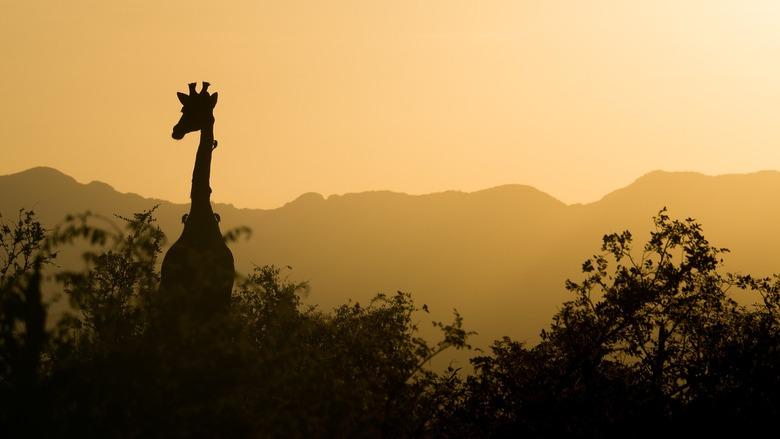 africa do sul turismo