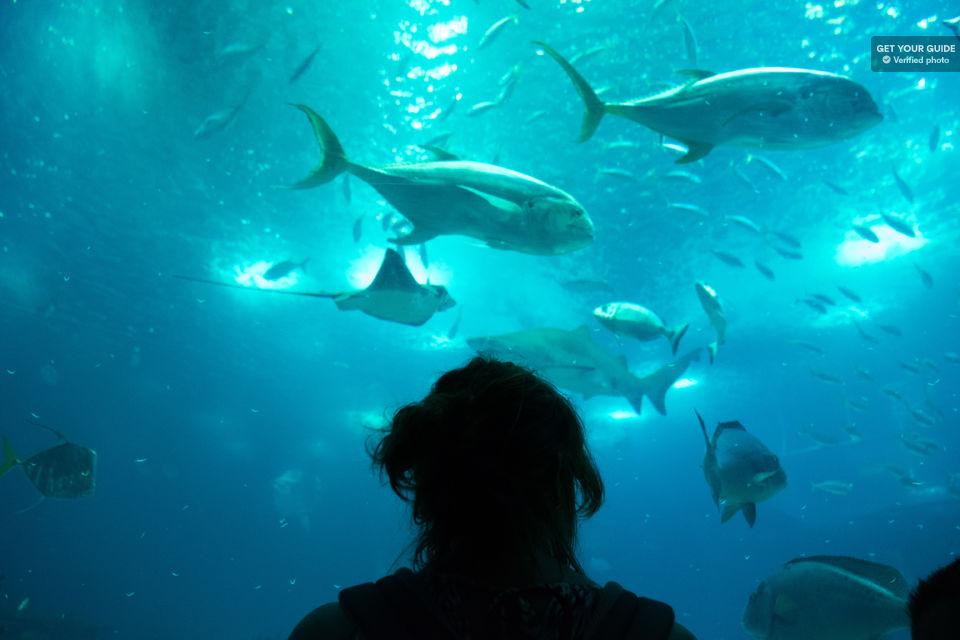 o que fazer em lisboa oceanário