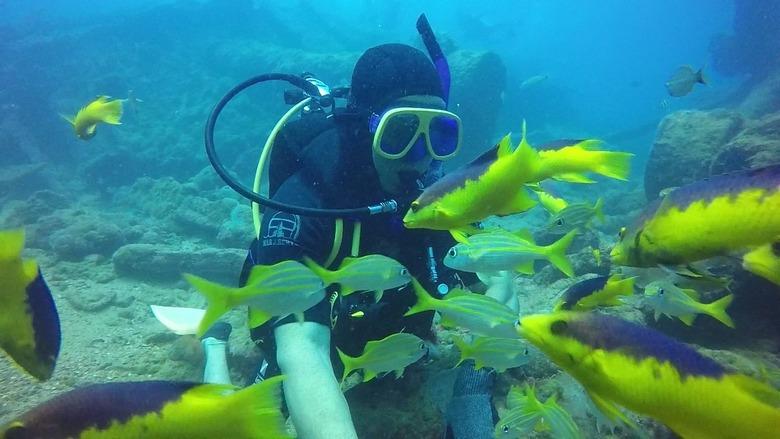 peixes à frente do mergulhador no mar cristalino de João Pessoa, na Paraíba.